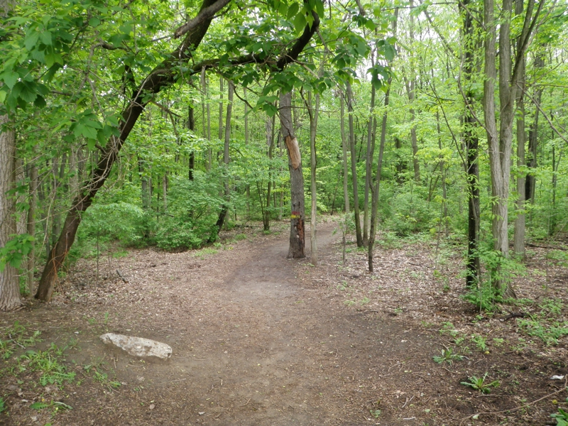 Trails in Rotary Park Livonia Michigan