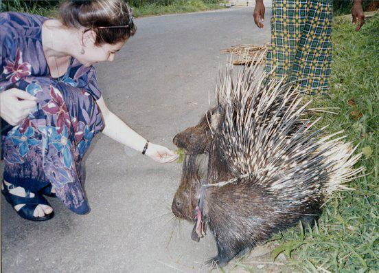 Flirting with a Porcupine