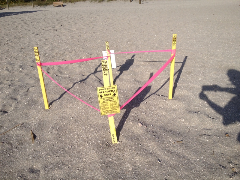 sea-turtle-nest
