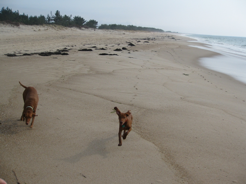 Beaches Where Dogs Are Allowed Rhode Island