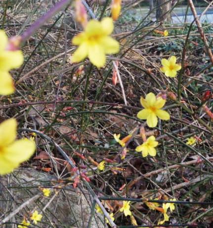 Baltimore Flowers HomeRome 410-530-2400