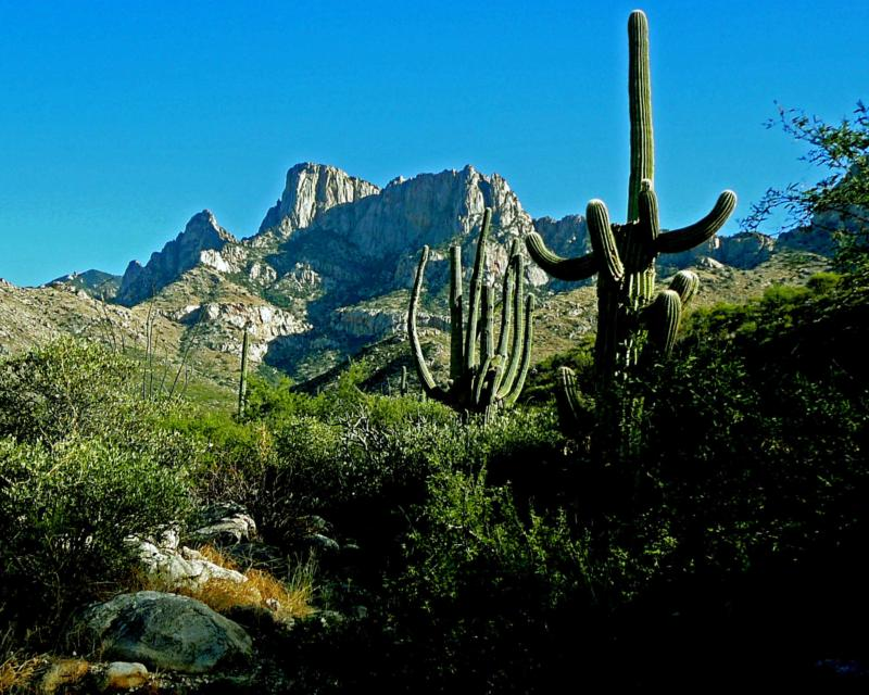 Desert Bighorns and Pusch Ridge: Mike in Tucson, mortgage lender