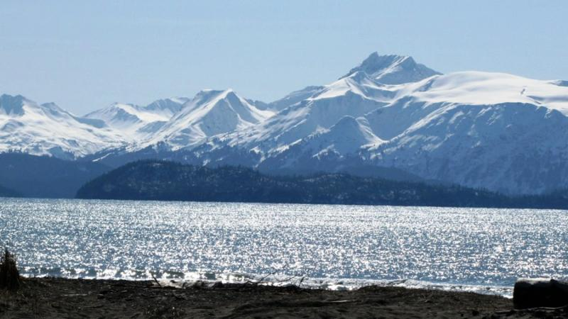 homer alaska blogs