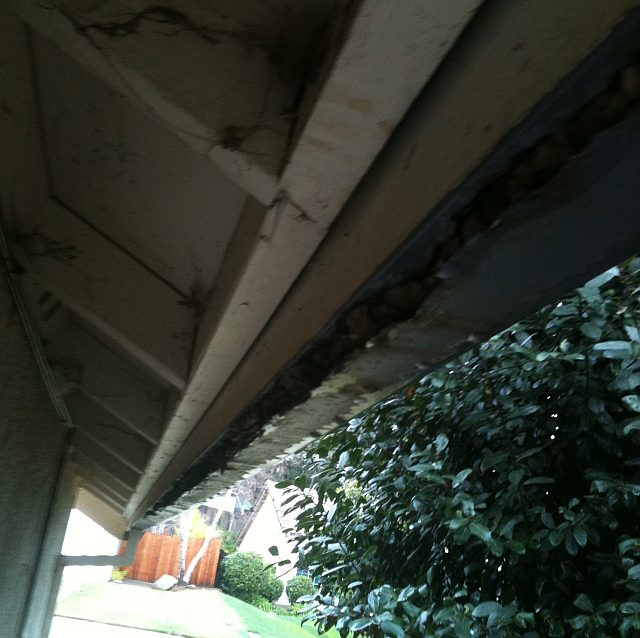 corrosive acid on gutters oak tree