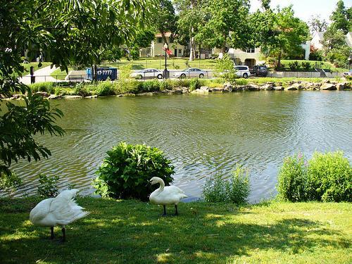 Swan Lake Tulsa Oklahoma