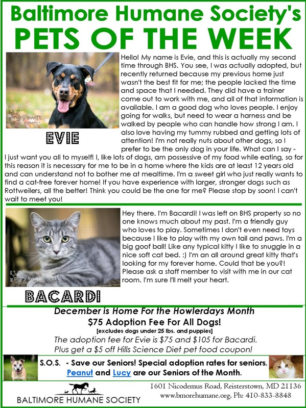 Pets of the week Baltimore Humane Society