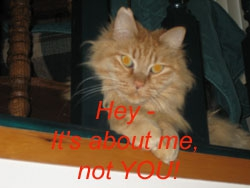 the its about me cat
