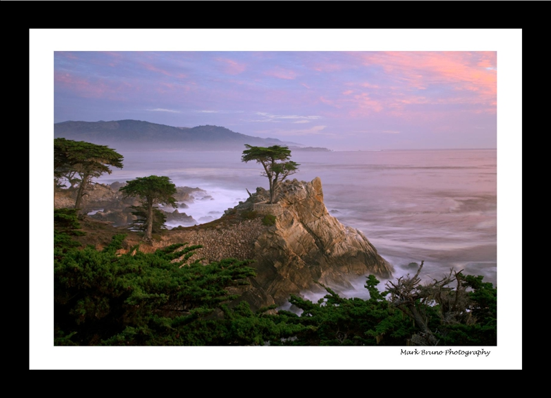 Pebble Beach, CA Lone Cypress Tree