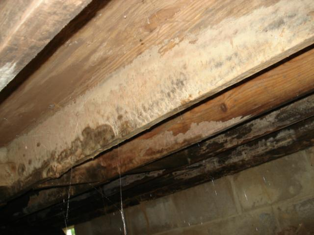 kentucky home inspector mold joists termites