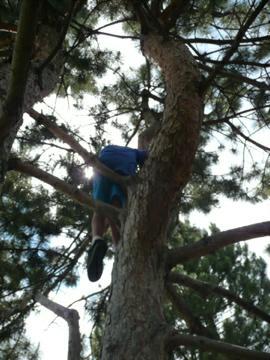 tree climbing in writers vista park
