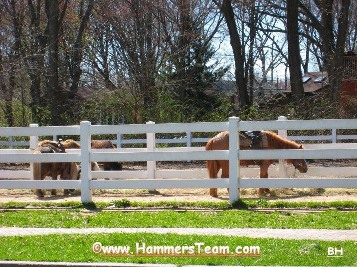 Van Saun Pony Ride