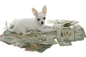 Puppy and cash