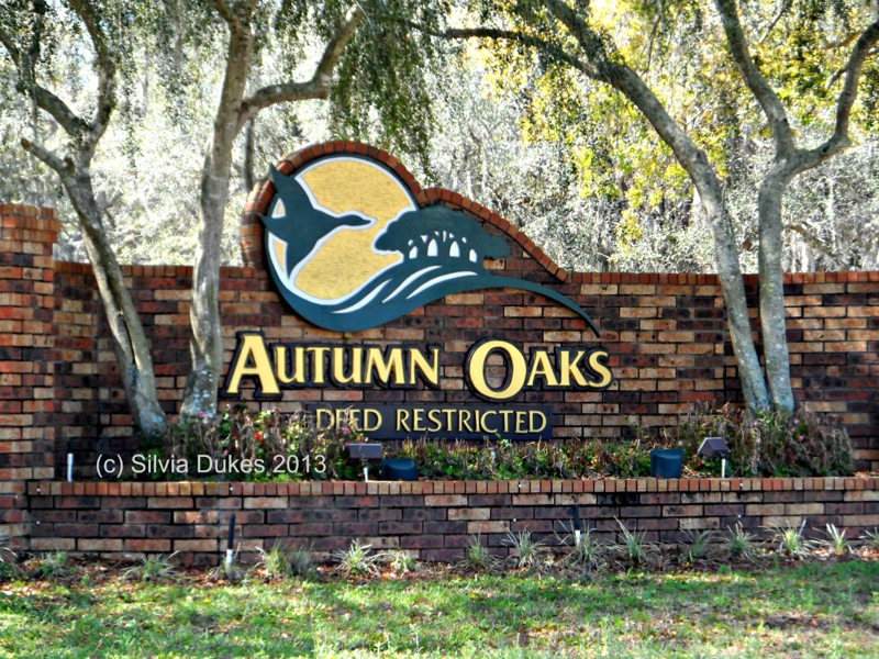 Autumn Oaks in Hudson Florida Photo by Silvia Dukes
