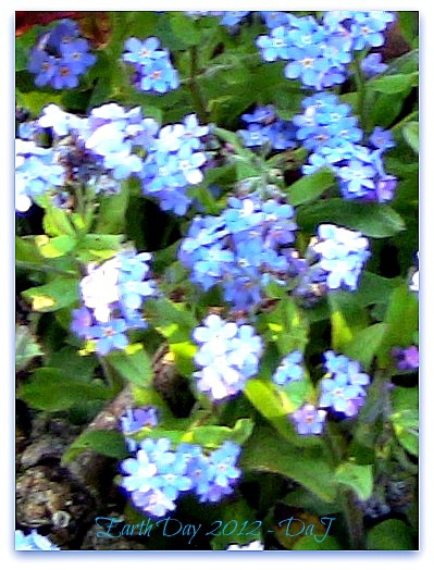 Earth Day 2012 - Forget-me-not