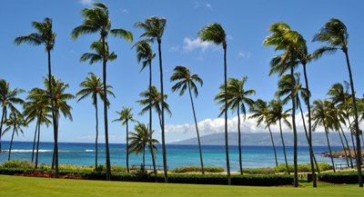 Coconut Grove on Kapalua Bay
