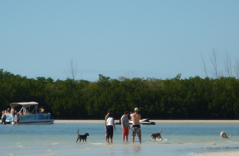 Bonita Beach Dog Park - Beach for Dogs!