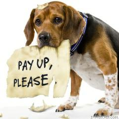 Pay pup