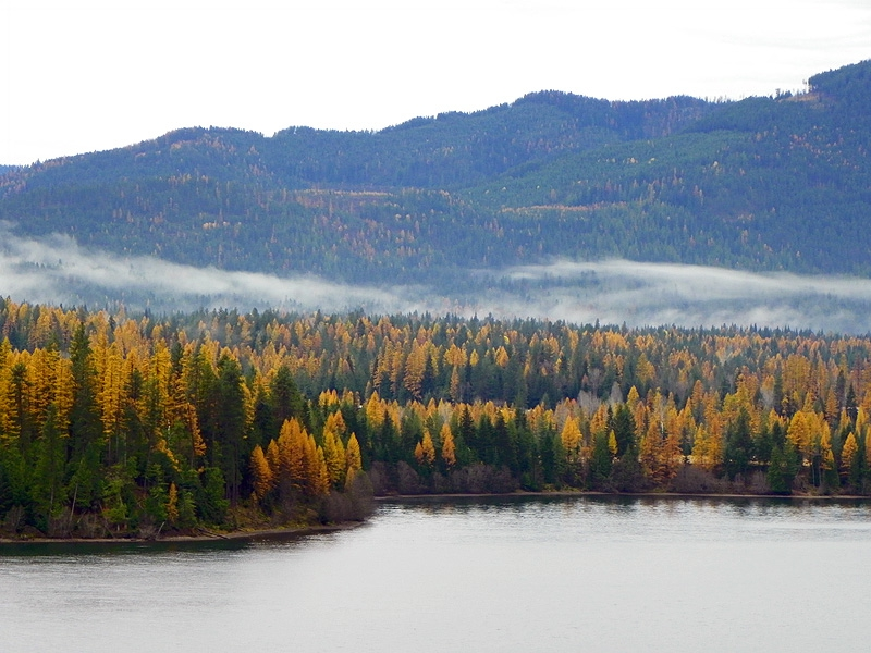 Clark Fork River autumn colors