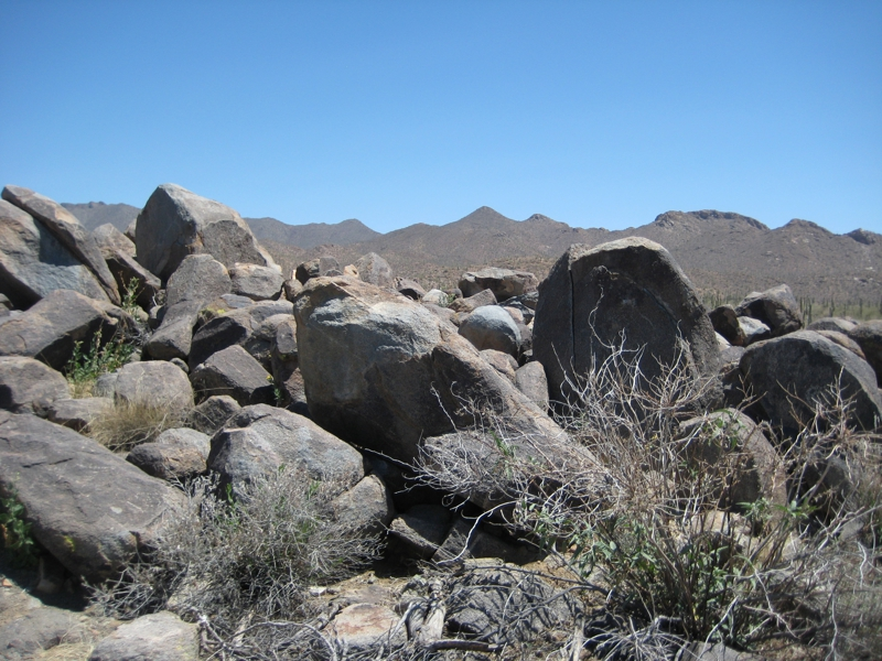 Petroglyphs at Signal Hill in Tucson Mountain Park