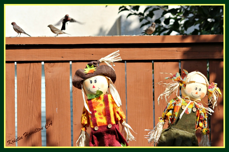 I Thought Scarecrows Supposed to Keep the Birds Away