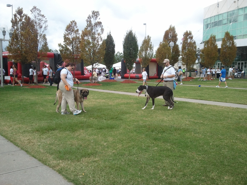 Large Dogs at Triangle Heart Walk!
