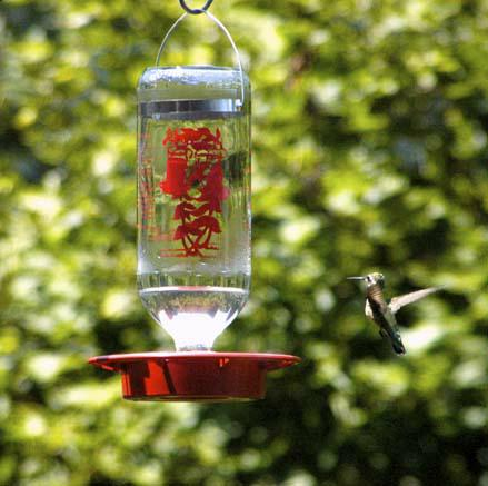 Hummingbird hovering near feader
