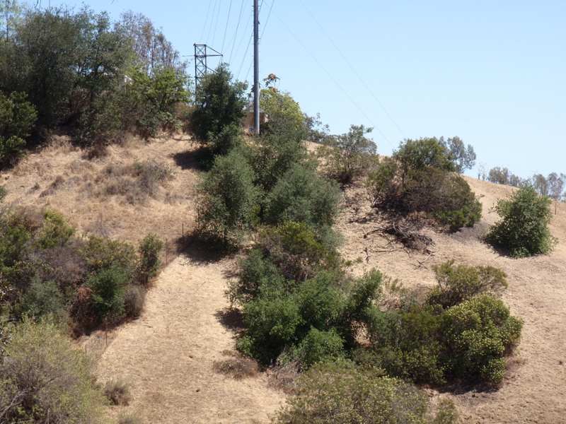 vacant view lots in the Hollywood Hills, Endre Barath