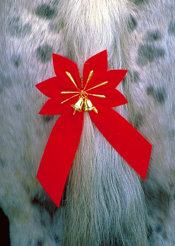 horse tail bow