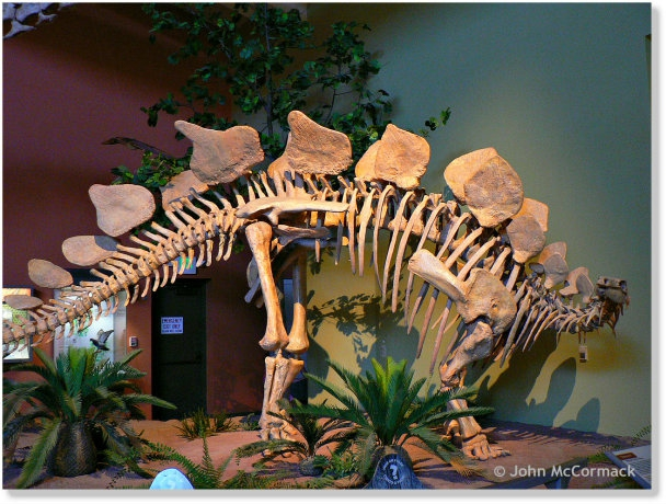 NM Museum of Natural History and Science in Albuquerque, John mccormack, realtor, albuquerque homes realty