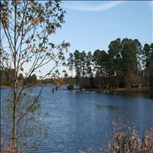Homes for Sale in Wood Lake - Columbia, SC Homes for Sale