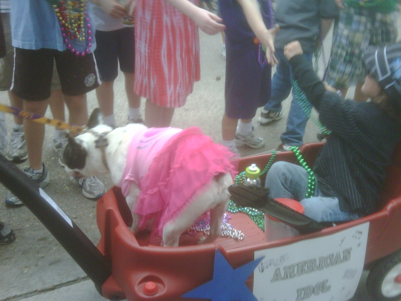 Fancy attire in the Krewe of Mutts parade