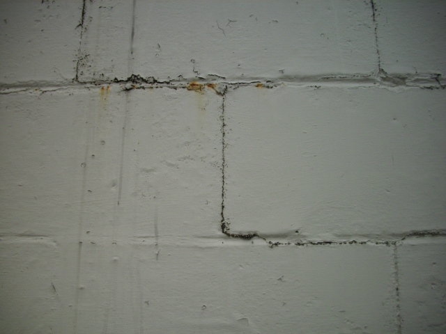 Does Mold Grow On Painted Walls