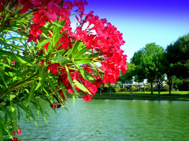 flowers on lake