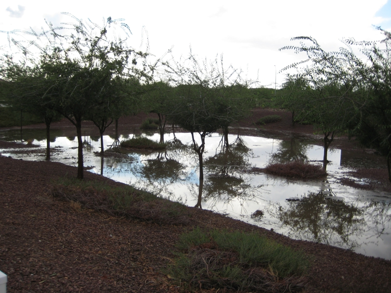 Moonsoon Damage at Gladden Farms, Marana, AZ