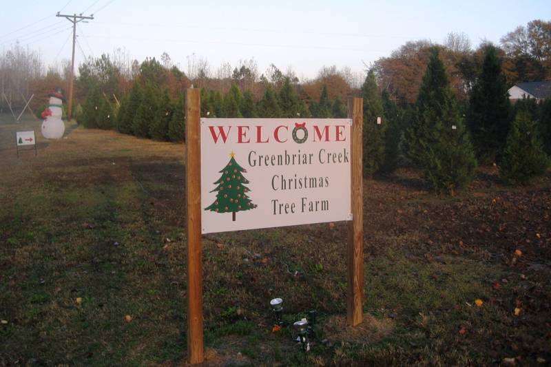 CUT YOUR OWN CHRISTMAS TREE IN OCONEE CO. AT GREENBRIAR