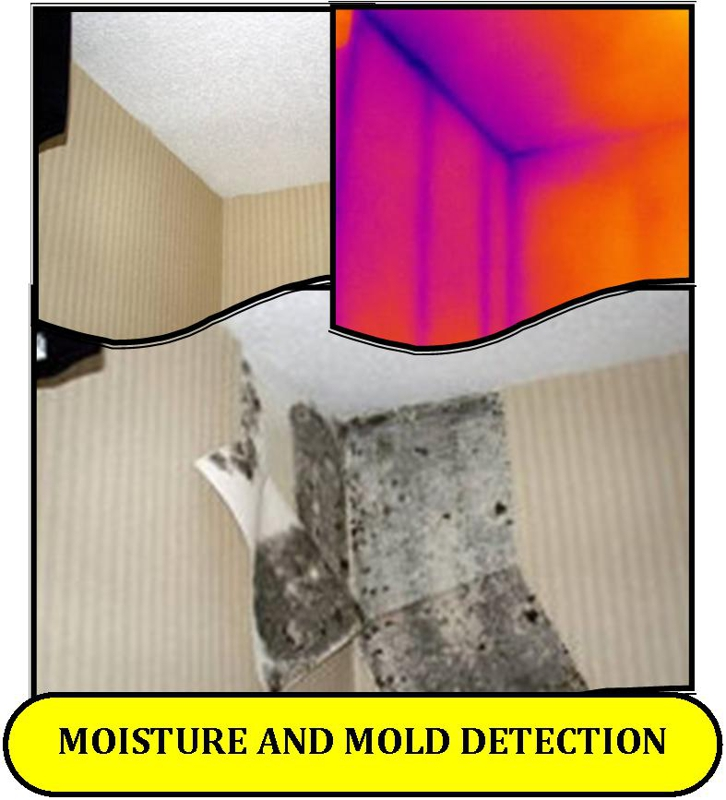 Avoid Costly Mold Testing With Ogden Utah Infrared Home