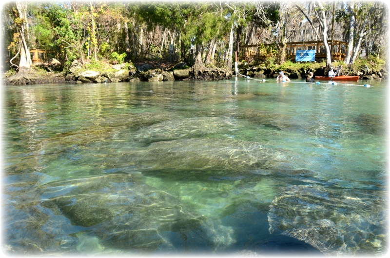 Three Sisters Springs Florida Map.Crystal River Florida National Wildlife Refuge Three Sisters