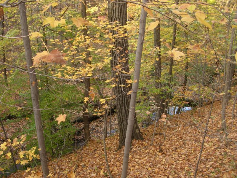 ravine at Highbanks Metro Park