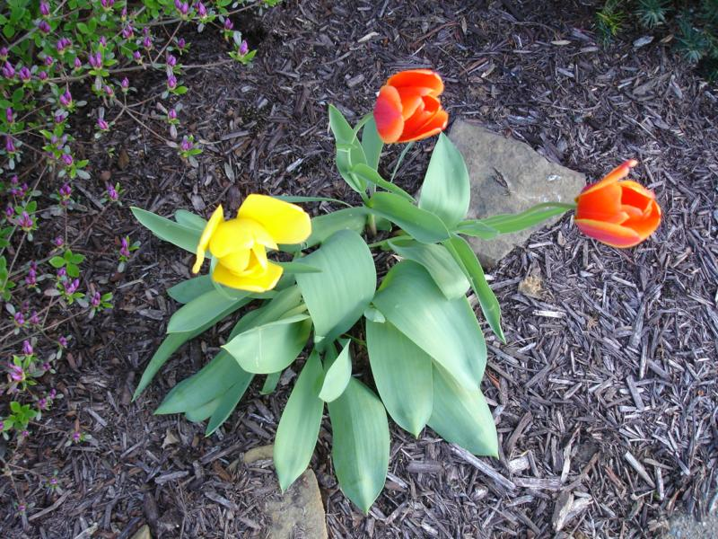 Flowers in Woodcrest Subdivison Owensboro KY