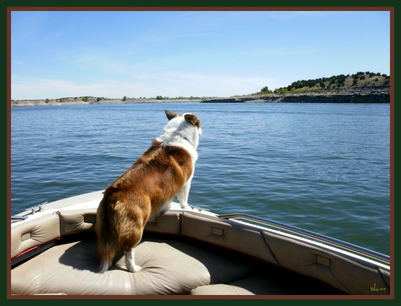 Dog on Boat at Lake Pueblo