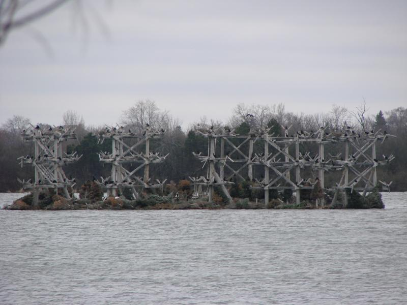 Heron Rookery at Bakers Lake Barrington Illinois