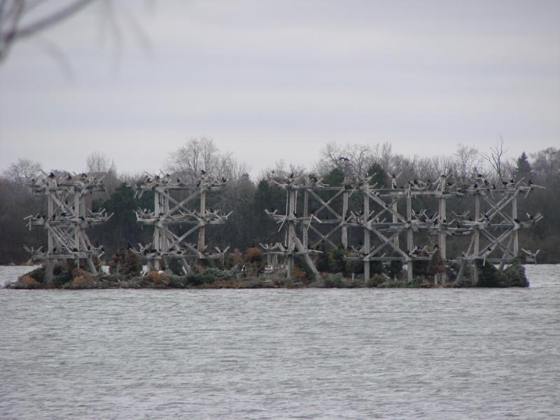Heron Rookery at Bakers Lake Barrington Illinois