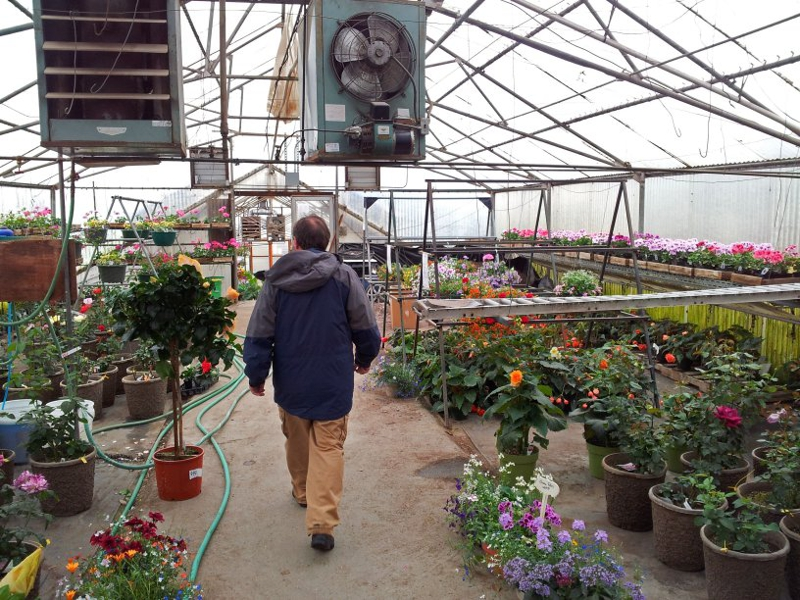 Fairbanks Gardening - Ann's Greenhouse