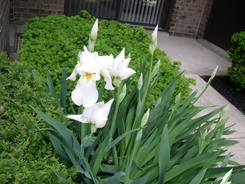 wordless wednesday:delaire landing blooms fresh flowers