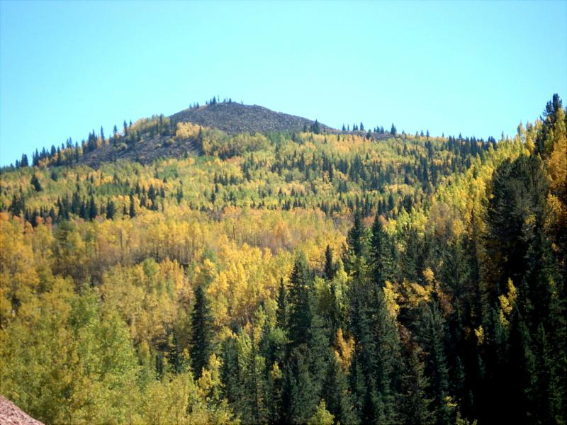 Aspen Trees near Cripple Creek Colorado