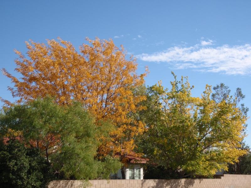 Fall in Southern California