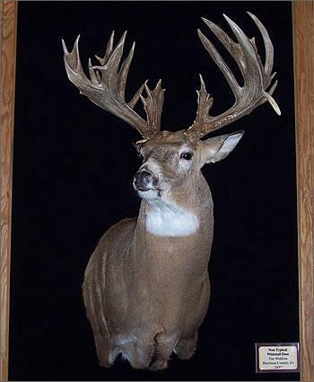 Harrison County Iowa Deer