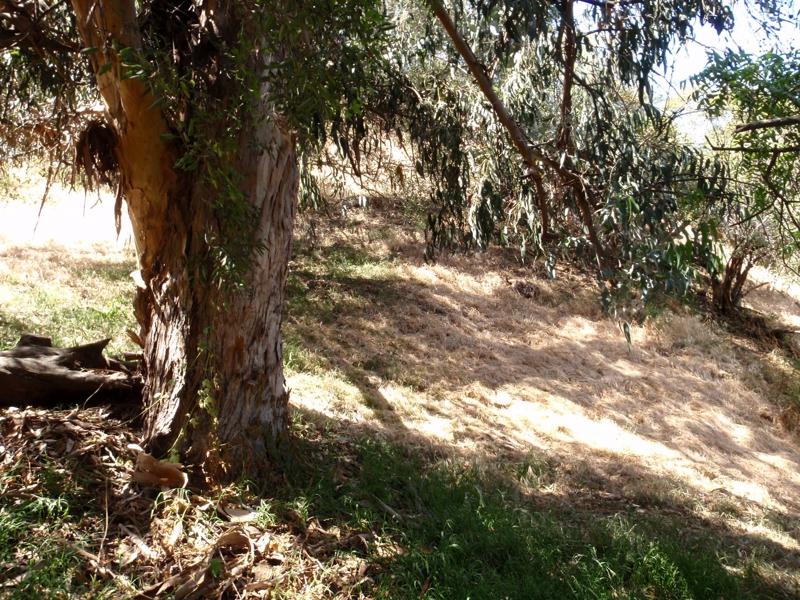 hollywood hills land for sale Endre Barath,Jr.