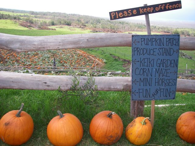 Aloha Friday from Kula Country Farms Pumpkin Patch