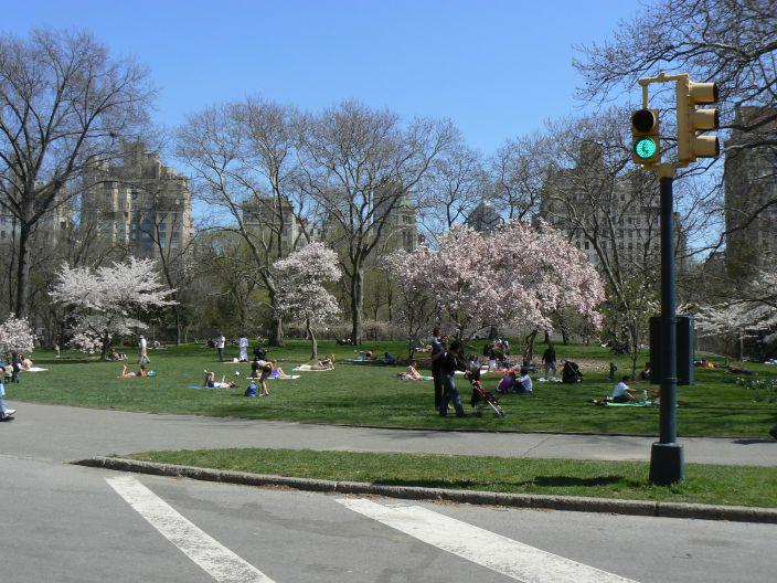 central park spring pictures. Central Park New York City by